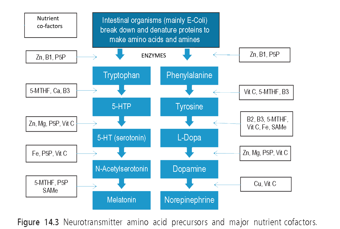 Neurotransmitters and nutrients